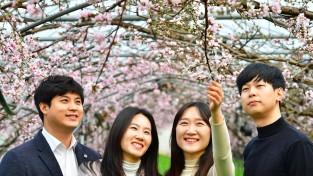[포토뉴스] 청도의 봄 알리는 시설하우스 복사꽃 꽃망울 터트려