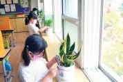 각남초,  '공기정화식물 1인 1화분 만들기' 활동
